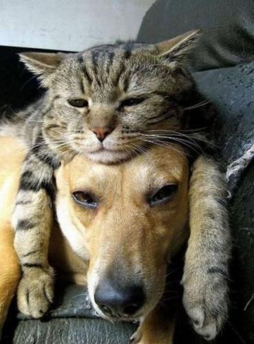 UNE APPLICATION pour contrôler le POIDS de votre ANIMAL DE COMPAGNIE