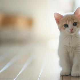 5 bonnes raisons de passer à la food saine et responsable pour notre chat
