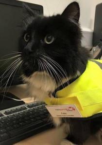 FELIX, le chat qui BOSSE pour une gare a eu une PROMOTION bien méritée