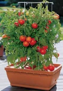 5 bonnes raisons de faire pousser des fruits et légumes sur le balcon