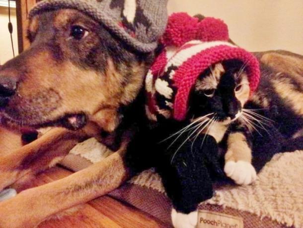 L'HISTOIRE EXTRAORDINAIRE du chat qui perdit son meilleur ami CHIEN !